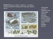 Аналогії (від грец. аналогія - подібність) - це подібність будови органів різ...