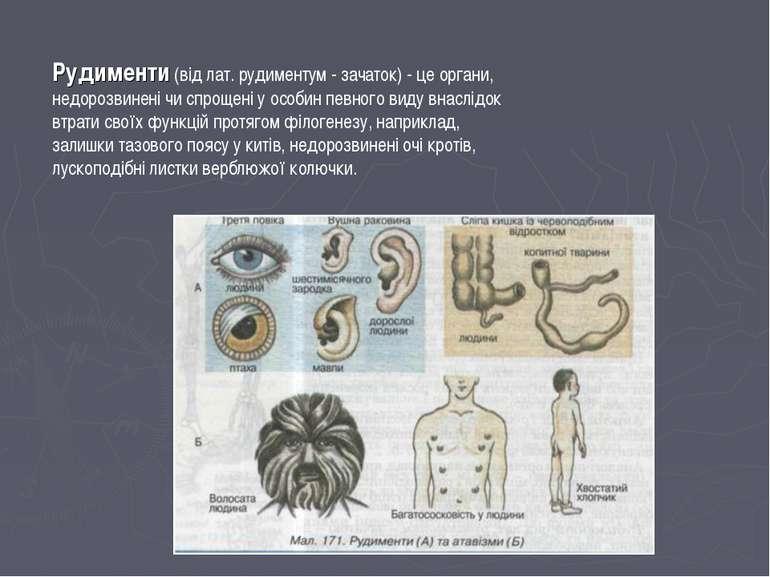Рудименти (від лат. рудиментум - зачаток) - це органи, недорозвинені чи спрощ...