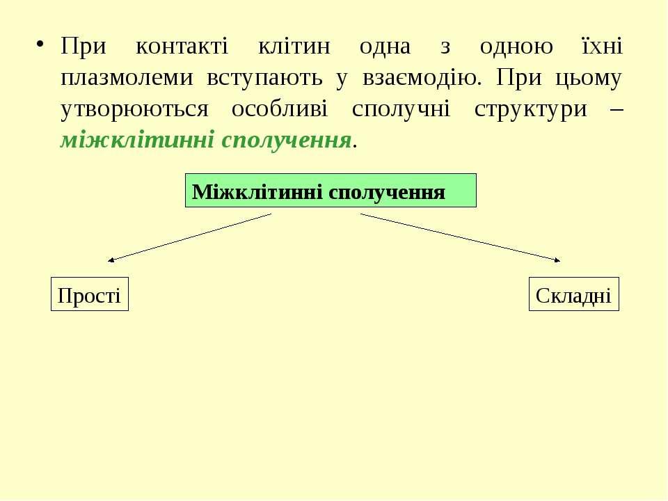 При контакті клітин одна з одною їхні плазмолеми вступають у взаємодію. При ц...