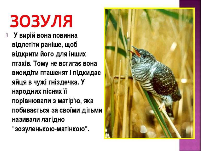 У вирій вона повинна відлетіти раніше, щоб відкрити його для інших птахів. То...