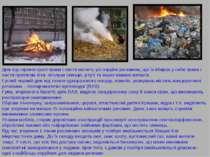Дим від горіння сухої трави і листя містить усі отруйні речовини, що їх вбира...