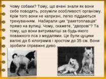 Чому собаки? Тому, що вчені знали як вони себе поводять, розуміли особливості...
