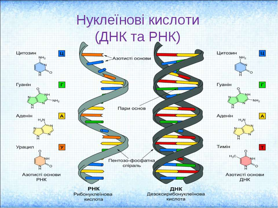 the main characteristics of dna and its functions
