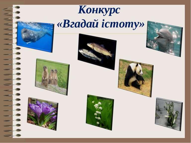 Конкурс «Вгадай істоту»
