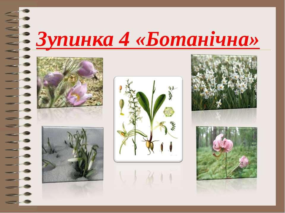 Зупинка 4 «Ботанічна»