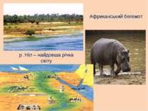 р. Ніл – найдовша річка світу Африканський бегемот