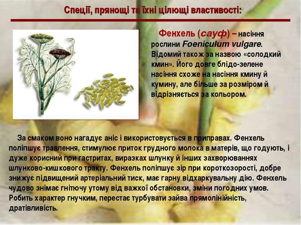 Спеції, прянощі та їхні цілющі властивості: Фенхель (сауф) – насіння рослини ...