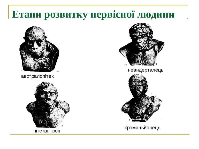 Етапи розвитку первісної людини австралопітек пітекантроп неандерталець крома...
