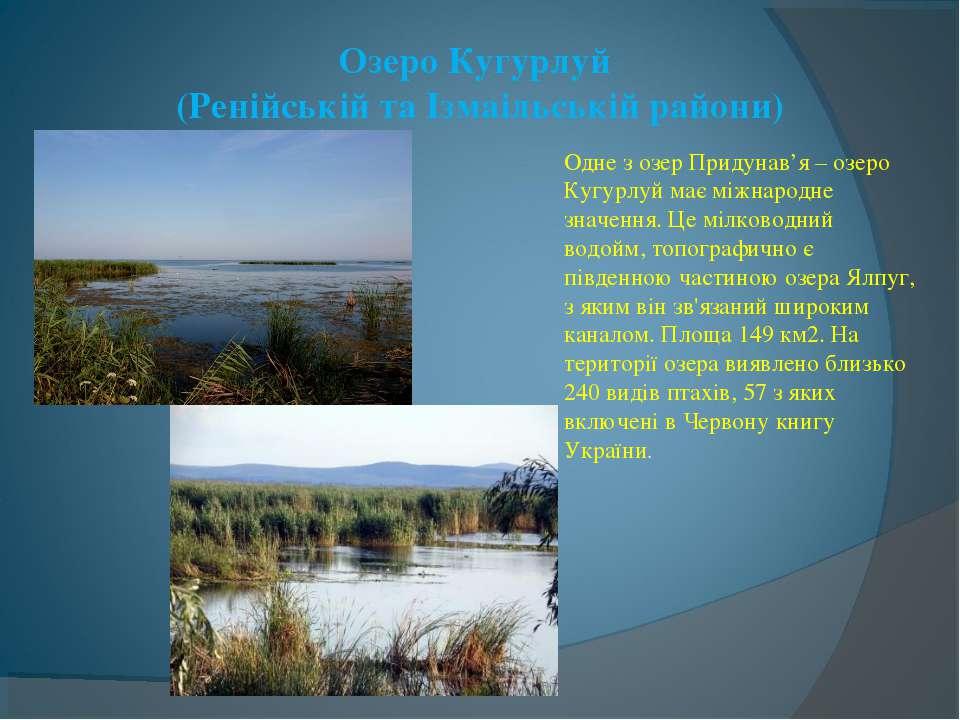 Озеро Кугурлуй (Ренійській та Ізмаільській райони) Одне з озер Придунав'я – о...