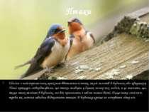Птахи Однією з найстрашніших прикмет вважається птах, який залетів в будинок ...