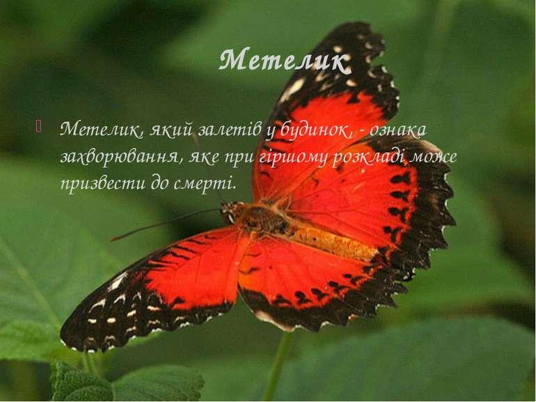 Метелик Метелик, який залетів у будинок, - ознака захворювання, яке при гіршо...