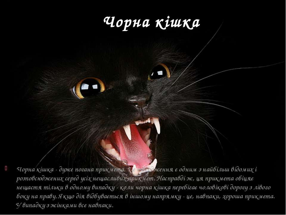 Чорна кішка Чорна кішка - дуже погана прикмета. Це твердження є одним з найбі...