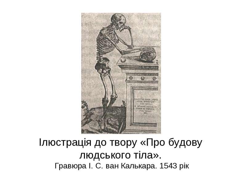 Ілюстрація до твору «Про будову людського тіла». Гравюра І. С. ван Калькара. ...