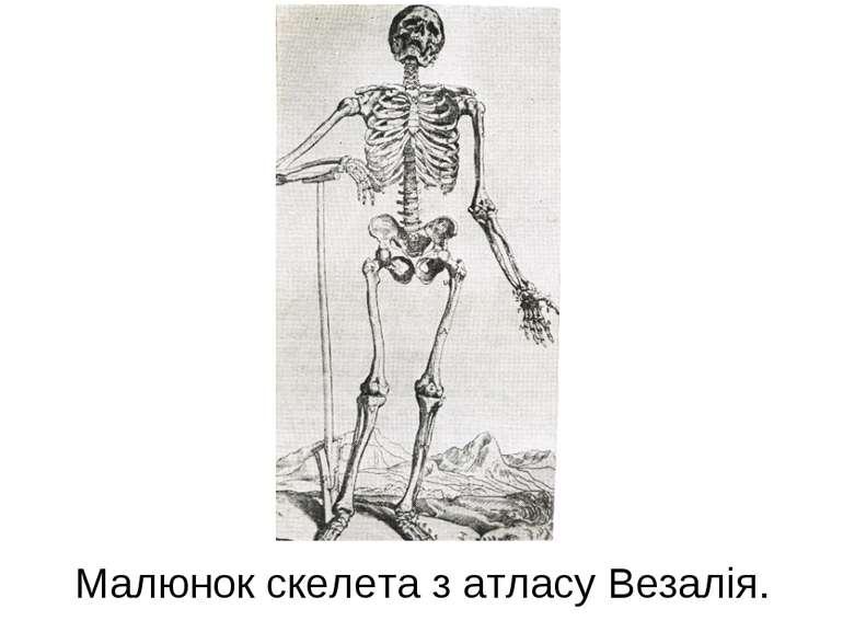 Малюнок скелета з атласу Везалія.