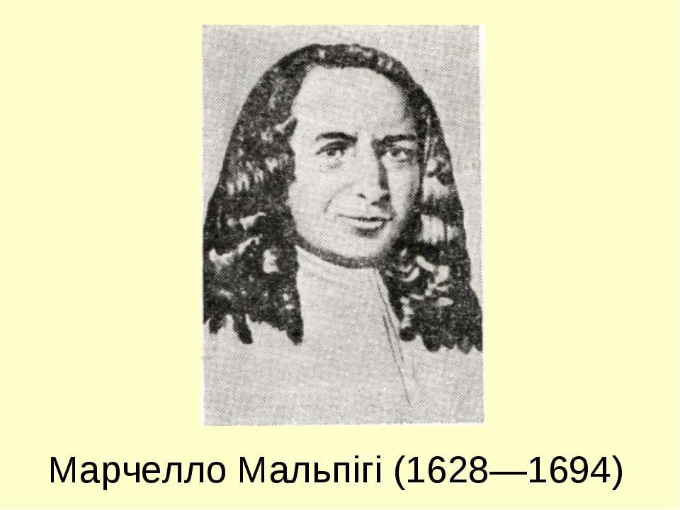 Марчелло Мальпігі (1628—1694)