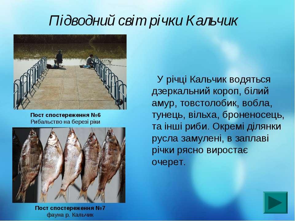 Підводний світ річки Кальчик У річці Кальчик водяться дзеркальний короп, біли...