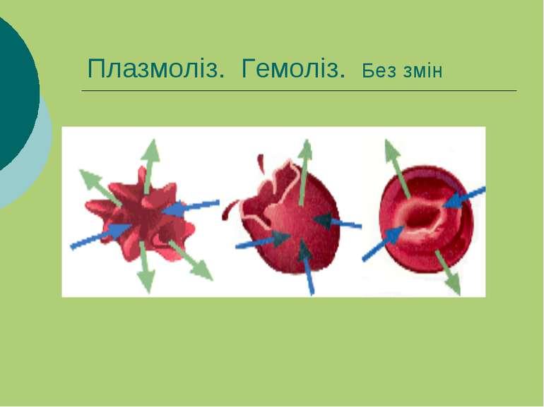 Плазмоліз. Гемоліз. Без змін