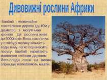 Баобаб – незвичайне товстелезне дерево (до10м у діаметрі) з могутньою кроною....
