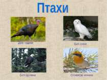 Дикі індики Білі сови Білі орлани Оливкові коники