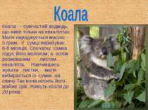 Коала – сумчастий ведмідь, що живе тільки на евкаліптах. Маля народжується ма...