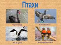 Чорні лебеді Великі баклани Альбатроси Золотогруді папуги