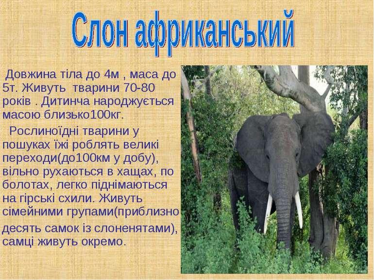 Довжина тіла до 4м , маса до 5т. Живуть тварини 70-80 років . Дитинча народжу...