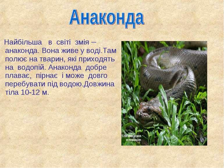 Найбільша в світі змія – анаконда. Вона живе у воді.Там полює на тварин, які ...