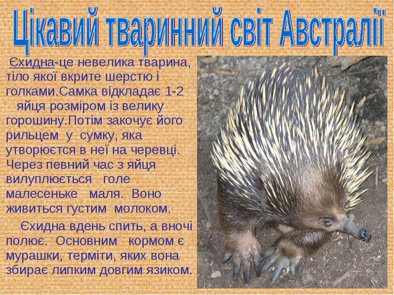 Єхидна-це невелика тварина, тіло якої вкрите шерстю і голками.Самка відкладає...