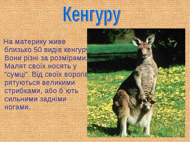 На материку живе близько 50 видів кенгуру. Вони різні за розмірами. Малят сво...