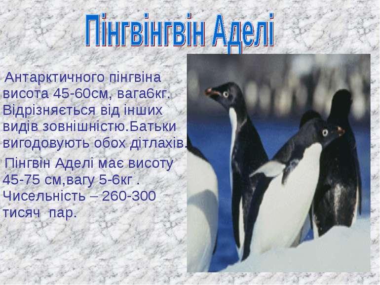 Антарктичного пінгвіна висота 45-60см, вага6кг. Відрізняється від інших видів...