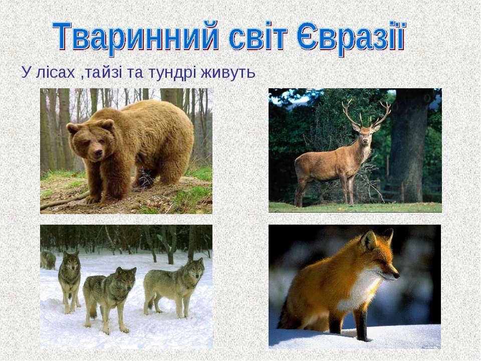 У лісах ,тайзі та тундрі живуть