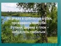 На річках в сріблястих шубах, проживають лісоруби. З глини, дерева й гілок – ...