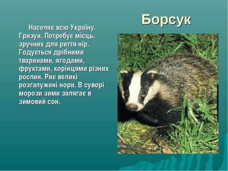 Борсук Населяє всю Україну. Гризун. Потребує місць, зручних для риття нір. Го...