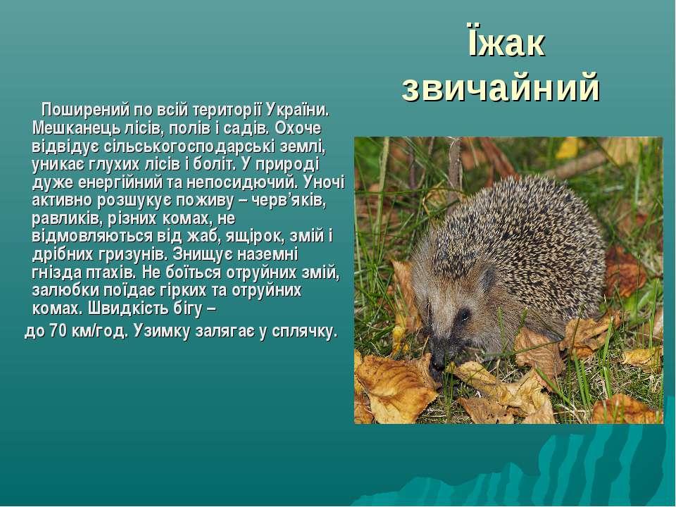 Їжак звичайний Поширений по всій території України. Мешканець лісів, полів і ...