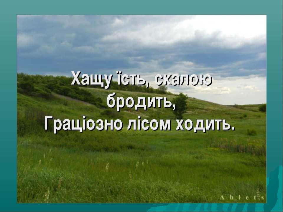 Хащу їсть, скалою бродить, Граціозно лісом ходить.