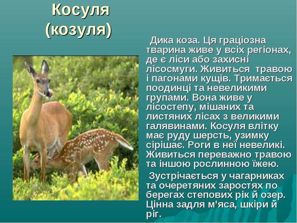 Косуля (козуля) Дика коза. Ця граціозна тварина живе у всіх регіонах, де є лі...