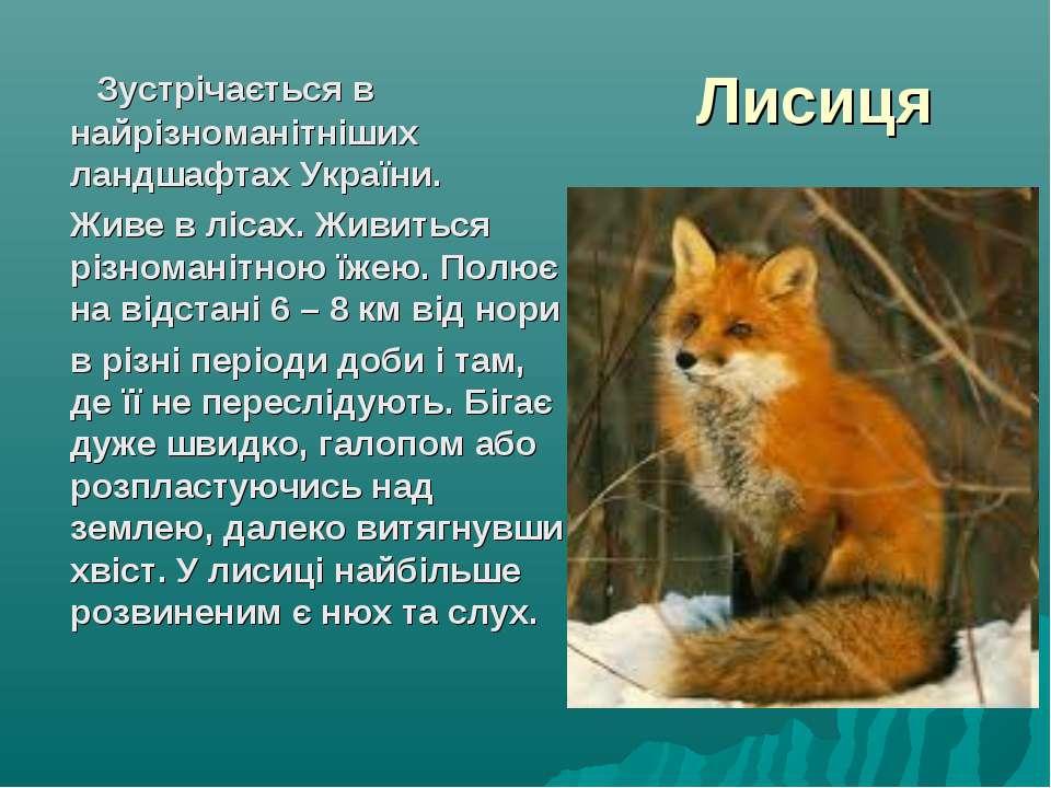 Лисиця Зустрічається в найрізноманітніших ландшафтах України. Живе в лісах. Ж...