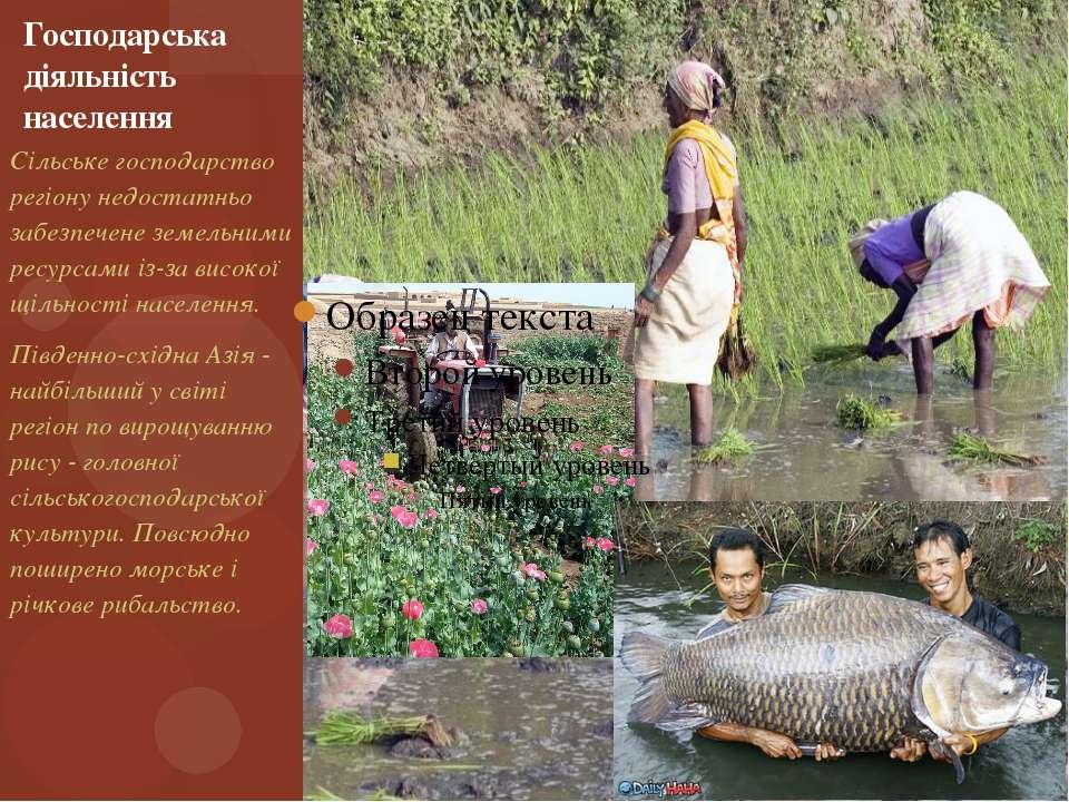 Господарська діяльність населення Сільське господарство регіону недостатньо з...