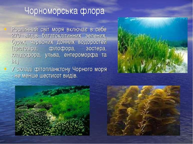 Рослинний світ моря включає в себе 270 видів багатоклітинних зелених, бурих, ...