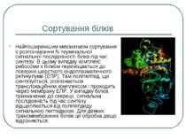 Сортування білків Найпоширенішим механізмом сортування є розпізнавання N-терм...