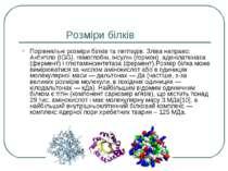 Розміри білків Порівняльні розміри білків та пептидів. Зліва направо: Антитіл...