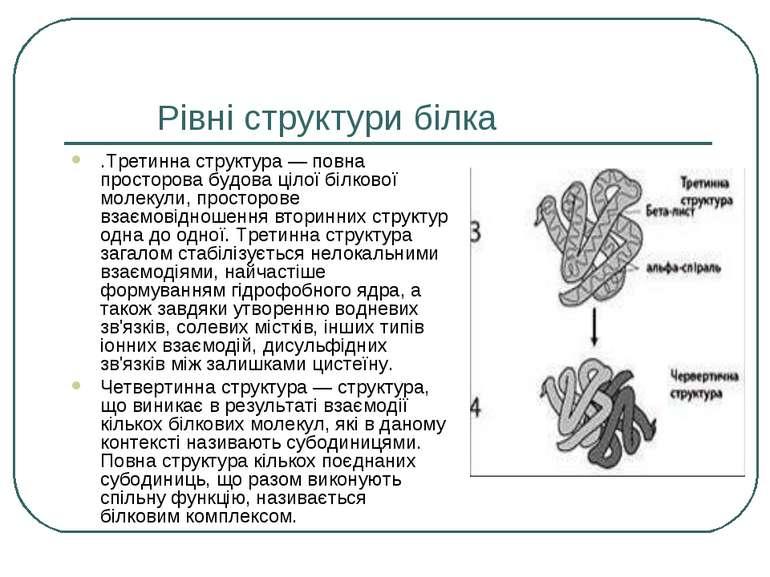 Рівні структури білка .Третинна структура — повна просторова будова цілої біл...
