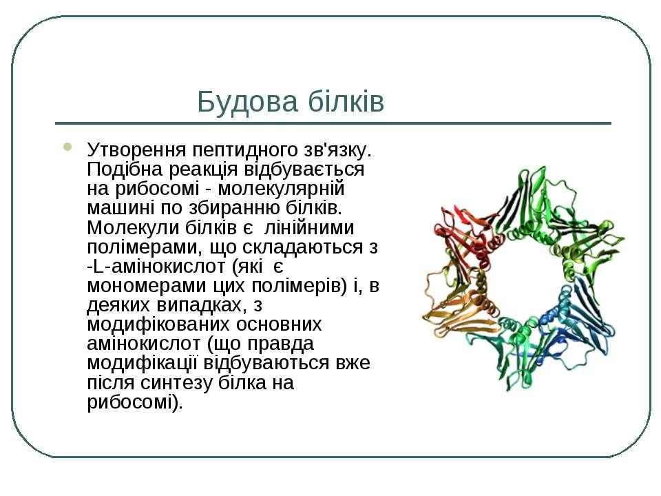 Будова білків Утворення пептидного зв'язку. Подібна реакція відбувається на р...