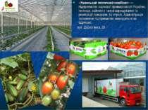 «Уманський тепличний комбінат»— підприємство харчової промисловості України,...