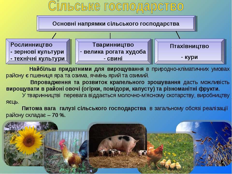 Основні напрямки сільського господарства Рослинництво - зернові культури - те...