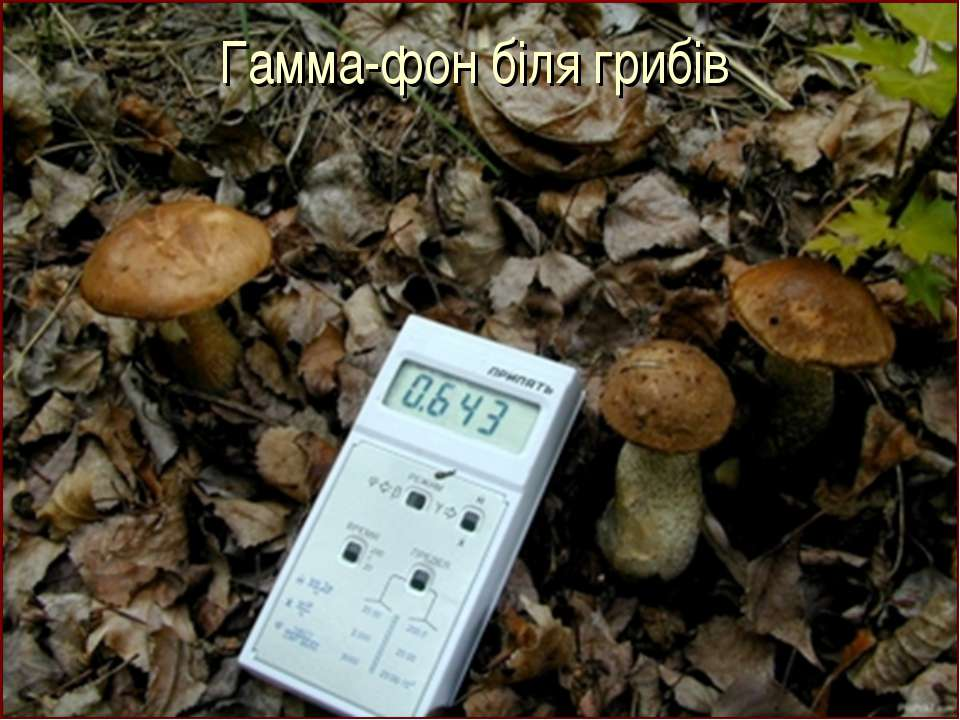Гамма-фон біля грибів