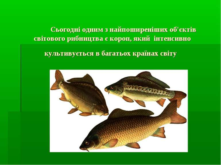 Сьогодні одним з найпоширеніших об'єктів світового рибництва є короп, який ін...
