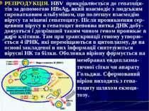 РЕПРОДУКЦІЯ. HBV прикріплюється до гепатоци-тів за допомогою HВsAg, який взає...