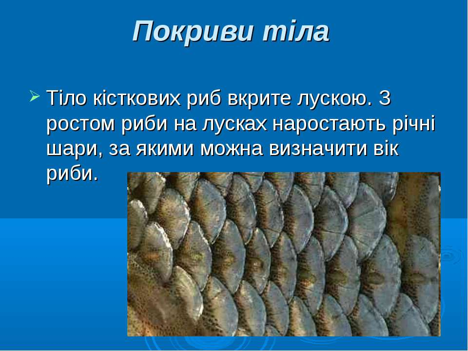 Покриви тіла Тіло кісткових риб вкрите лускою. З ростом риби на лусках нарост...