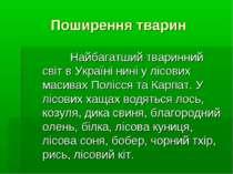 Поширення тварин Найбагатший тваринний світ в Україні нині у лісових масивах ...